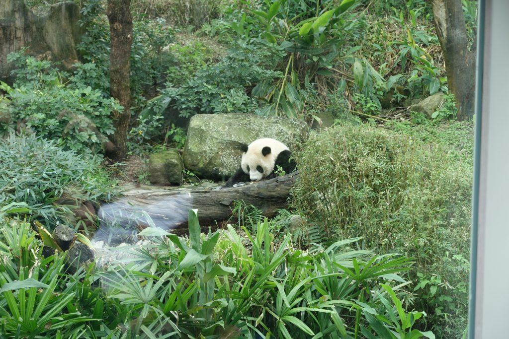 Light at Taipei Zoo 8