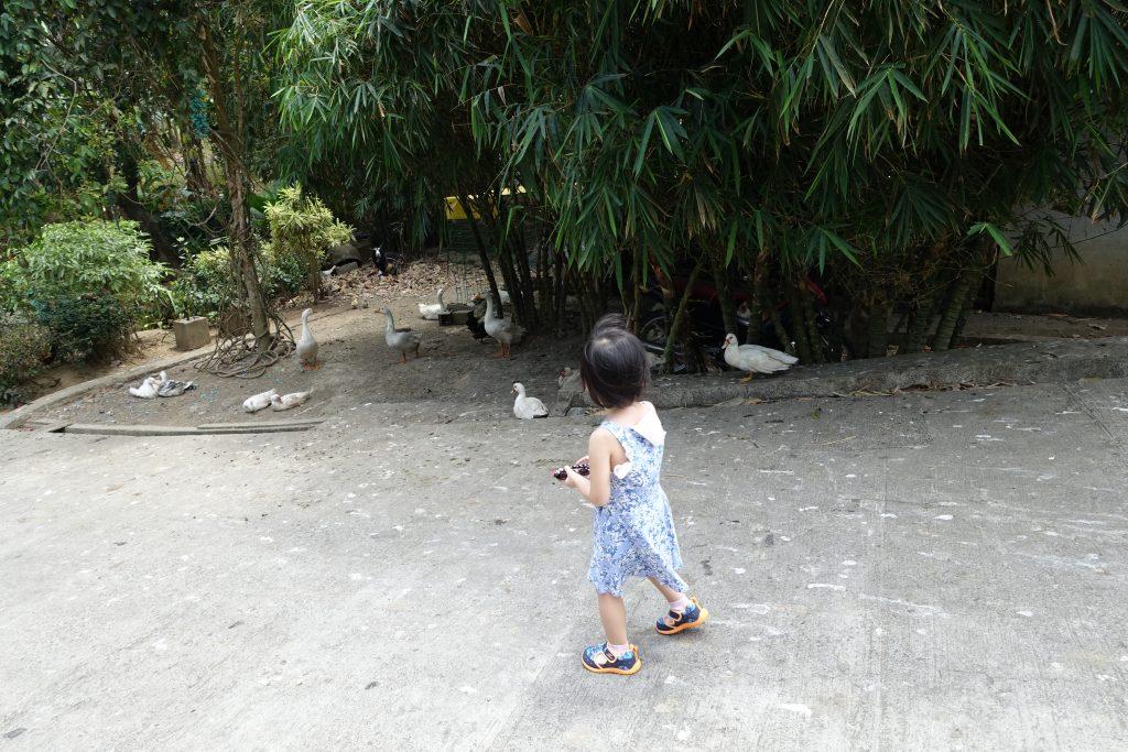 Cintai Corito's Garden 7