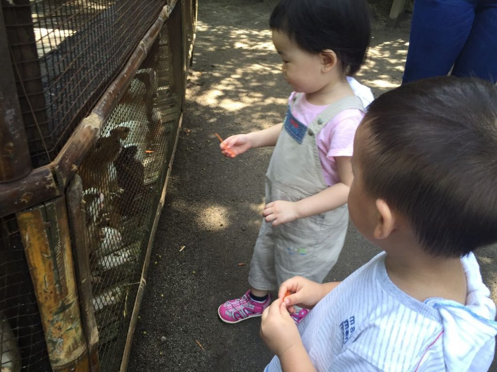 The fun farm at sta. Elena 5