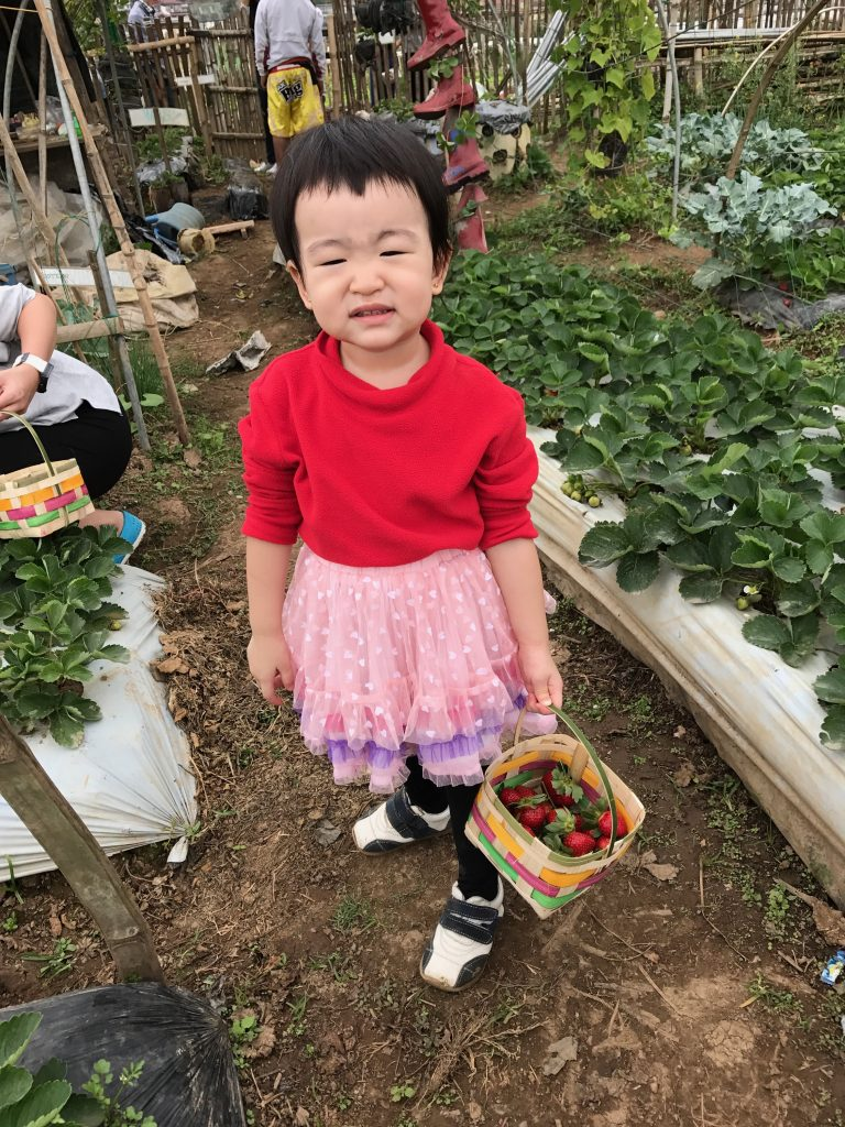 Strawberry picking in baguio 2