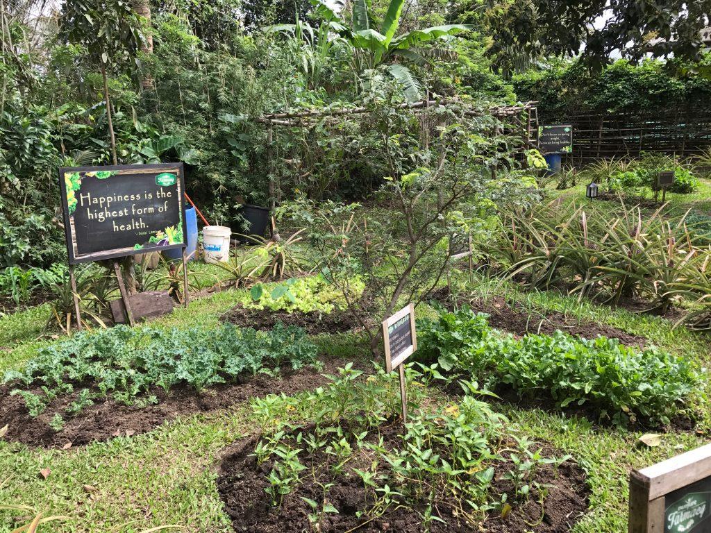 The farm at Nurture Farmacy